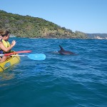 Dolphin Kayak with Epic Ocean Adventures